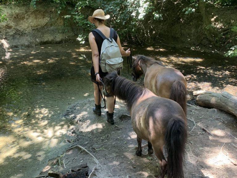 zwei-ponys